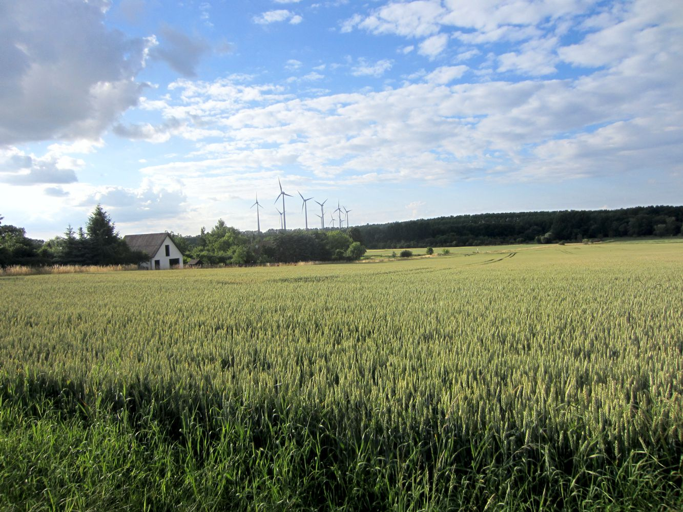 Feld vor Hagenest